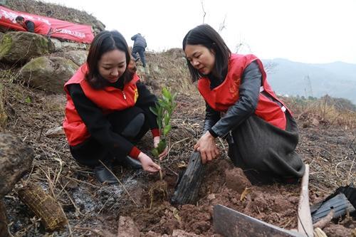 云阳开展全民义务植树活动 促进森林绿化提质扩面增效