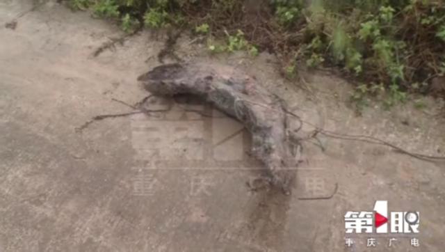 盗贼偷挖乌木 差点破坏西南片区天然气主管道