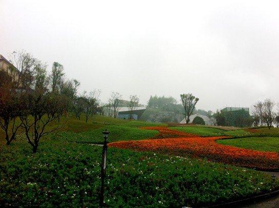 复地·花屿城 浪漫鲜花示范区28日晚惊艳绽放