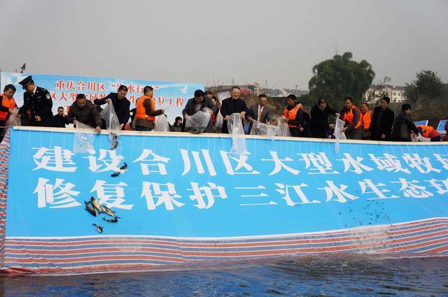 """合川区""""净水""""启动,10万鱼苗投放涪江水域牧场!"""