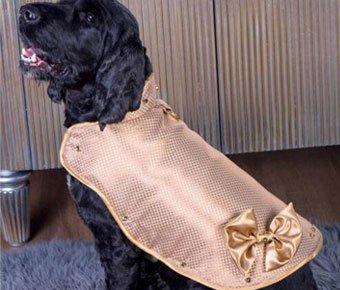 最贵狗狗外套 24K纯金打造价值882万元
