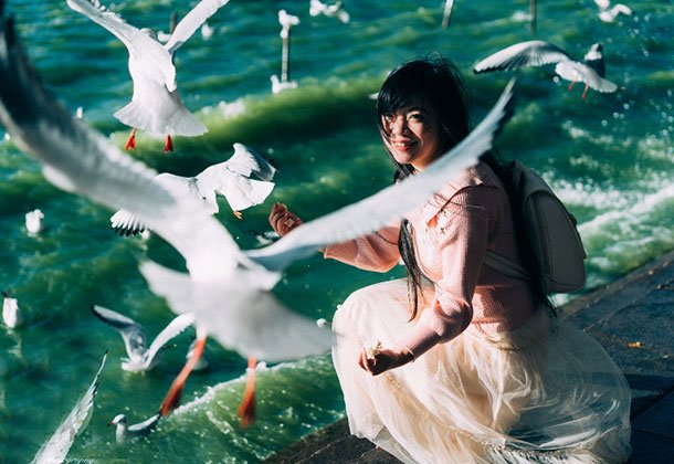 去不了巴黎喂鸽子 可以去昆明滇池边喂红嘴鸥