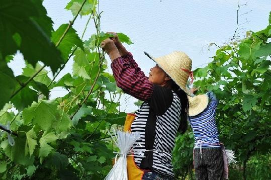"""推动农村产业融合发展 南岸区打造农业""""五朵金花"""""""