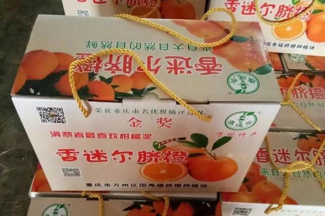 龙沙镇玫瑰香橙再获丰收 果农喜上眉梢