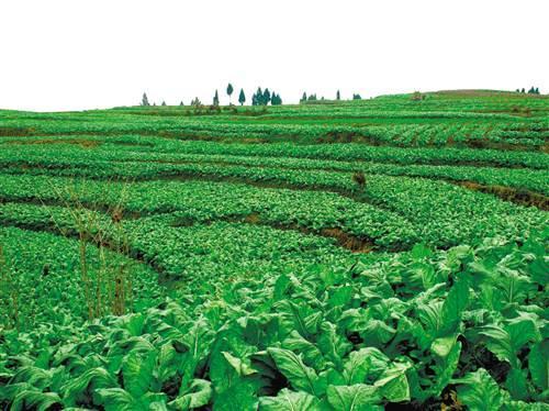 """丰都探索生态农业之路 碧溪河两岸""""长""""出新产业"""