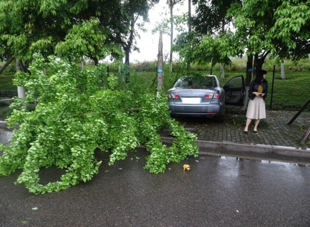 新手女司机误将油门当刹车 撞断行道树损失近2万