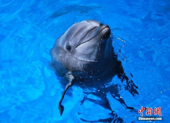 曾与海洋公园业者和动物协会就改善海豚,海狮等海洋哺乳动物的生活