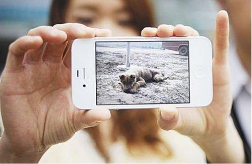 驾校训练场棒杀小狗 学员手机全程拍下失声痛哭
