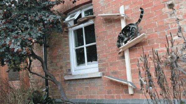 给你家猫主子来个新玩具 爬上爬下好欢乐