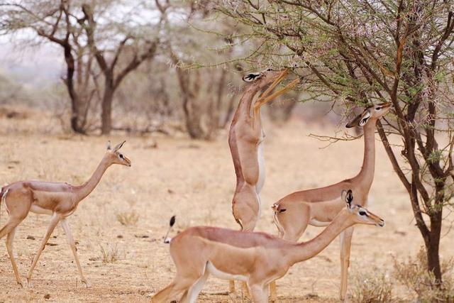男子裸辞去非洲拍狮子 耍着挣钱比500强上班年薪还高