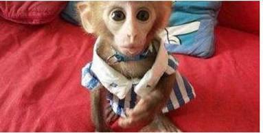 重庆一女子本来准备买个猴来耍 结果被卖猴的当猴耍