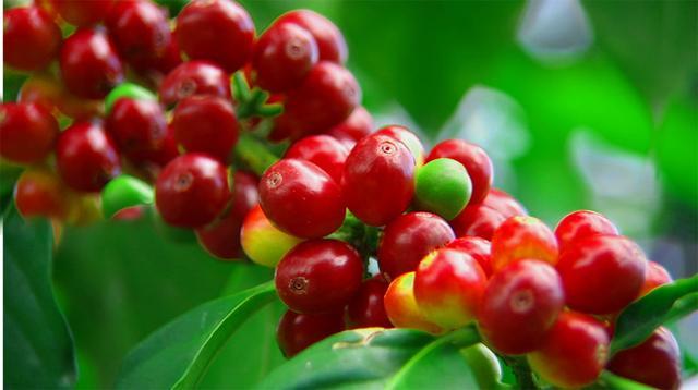 雀巢咖啡Dolce Gusto云南限量版意式浓缩咖啡成功上市