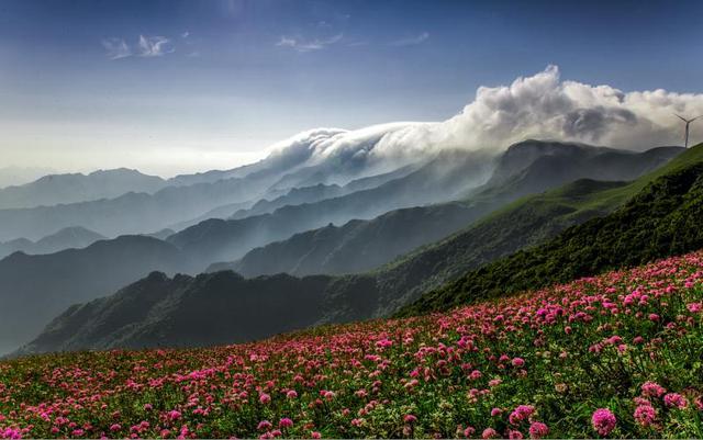今夏去贵州毕节花海避暑 门票机票民宿都有优惠