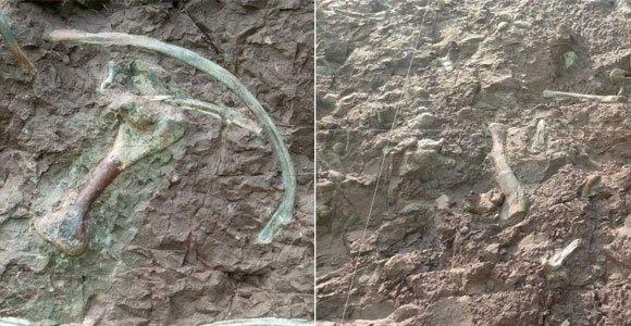 重磅!重庆发现世界级恐龙化石群
