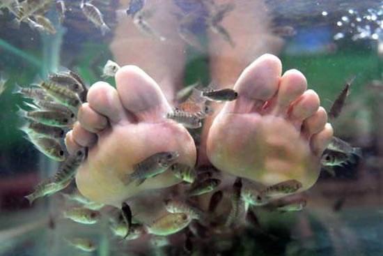 喜爱让小鱼吃掉脚上的死皮?当心脱甲症