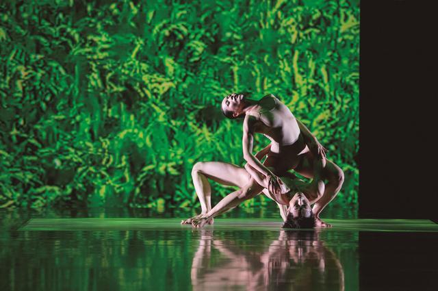 《稻禾》:林怀民用舞蹈记录一方稻田的生命轮转
