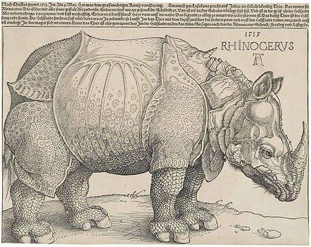 丢勒画的犀牛