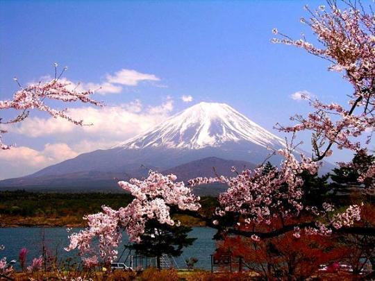"""日本人的花道精神:从""""死狂""""到""""物哀"""""""