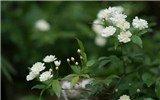对谈植物星球酋长李叶飞,寻回植物与生活的美好关系