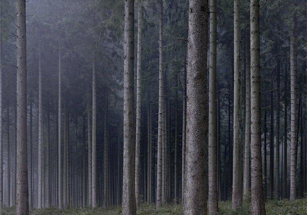 隐秘的森林