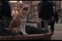 刘新宇:忠犬八公的故事与日本式的愚忠