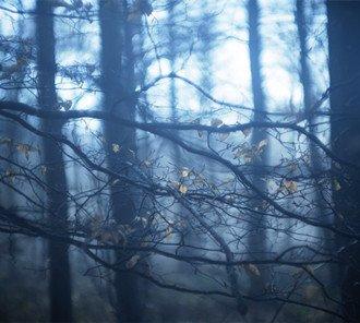 寄生幽林深处的精灵:Mia Morvan的生态摄影