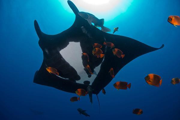 墨西哥revillagigedo群岛附近的海域生活着几百种不同鱼类.