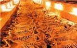 从春秋齐国的殉马坑,看古代的大屠杀
