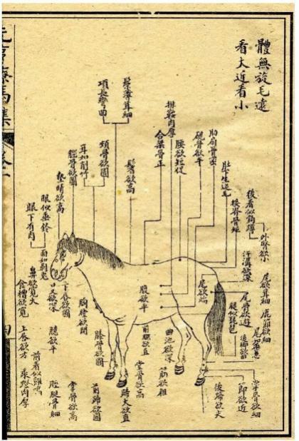 马车结构介绍图
