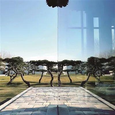 """王中军的""""松美术馆"""",长着199棵松树"""