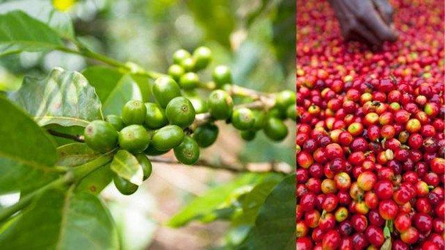 咖啡豆怎么玩?