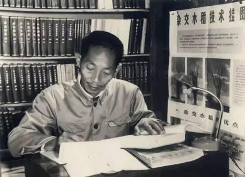 壁立千仞——五十年前:袁隆平发表论文的意义图片