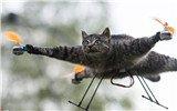 艺术家发明动物标本无人机