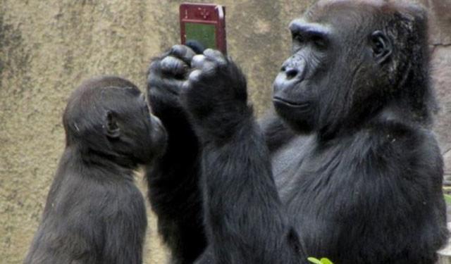 换作猩猩便大不相同.这个天才动物顿时成为奇异的语言标本.