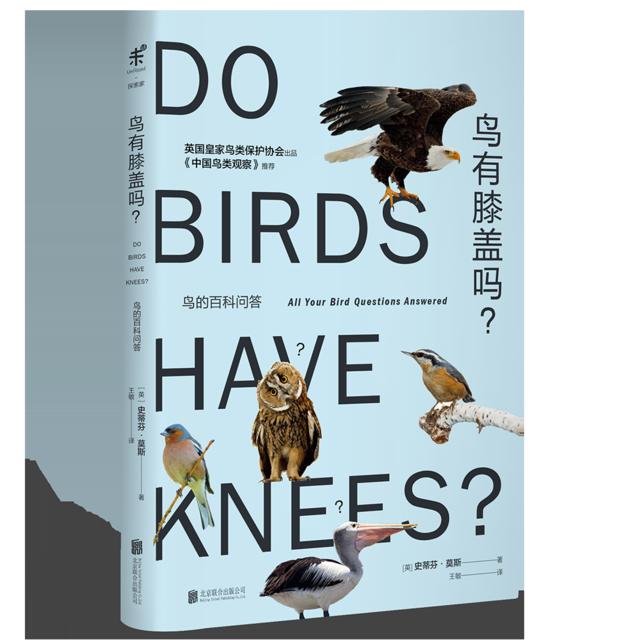 鸟有膝盖吗:一场鸟类信息的饕餮盛宴