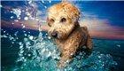 英国狗狗摄影获奖作品