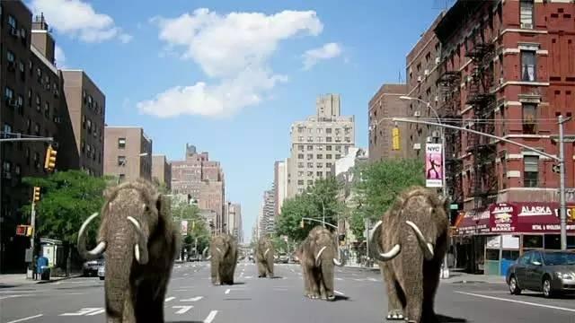 真正的疯狂动物城,就是圈养人类的城市