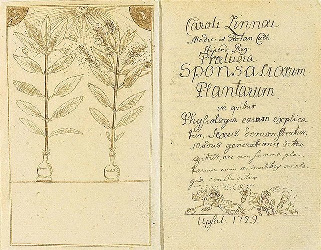 林奈的植物学论文