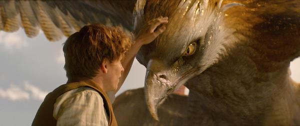 《神奇动物在哪里》剧照。 对于哈迷来说,这两条故事线索既充满了新鲜的魔法元素,又连接着《哈利·波特》系列既存的文本脉络。 一方面,围绕着神奇动物展开的故事线索,在《神奇动物在哪里》中可谓大放异彩。而这条线索同时也呼应并延展了《哈利·波特》系列的一处重要设定:哈利在魔法学校选修过一门名为保护神奇动物课的课程,这门课程的指定教科书——《神奇动物在哪里》就是由纽特撰写的。这本在哈利·波特的时代已成为传世经典的著作,在这部与之同名的电影中以笔记手稿的形式出