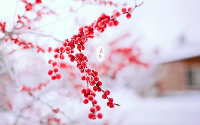 立冬和冬至有啥区别,你知道吗?