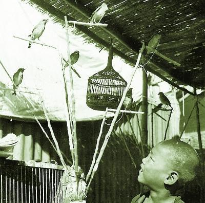 看老北京人如何以养鸟为趣