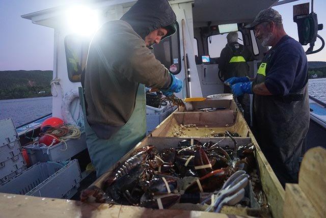 如同海上外科手术室般的渔船甲板