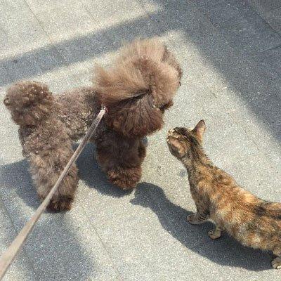 养狗人普遍会犯的错误,正是你们被人恨的原因