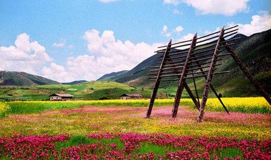 6月去香格里拉,这时正是高山草原的夏季,在那一层绿色之上,满辅着一