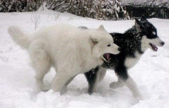 """【玩儿法】带着狗狗旅游?有它们才不""""狗带"""""""