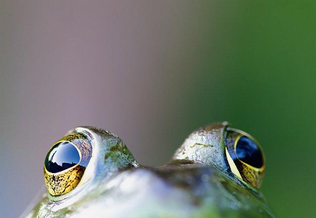 这里我们收集了100张奇异的爬行/两栖动物的照片,有青蛙、蛇、蜥