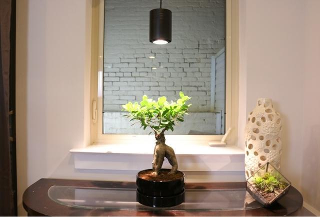 这是个专门帮助室内植物光合作用的智能LED灯