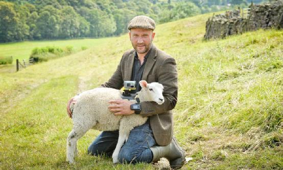 """索尼""""雇佣""""绵羊直播环法 在羊身上装摄像机"""