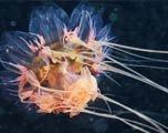 多彩的海底幽灵