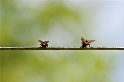动物园摄影技巧分享重口味昆虫摄影 看微距镜头下的昆虫   两只非常有
